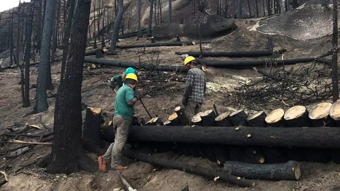 Philbreak 2019: Spend your spring break helping Philmont recover from wildfires